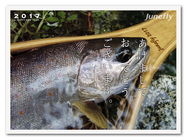 Facefish_B170101.jpg