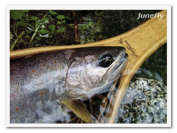 Facefish_B160901a.jpg