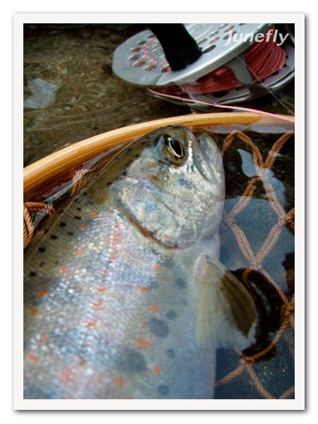 Facefish_C120330.jpg