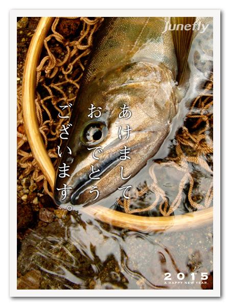 Facefish_C150101.jpg