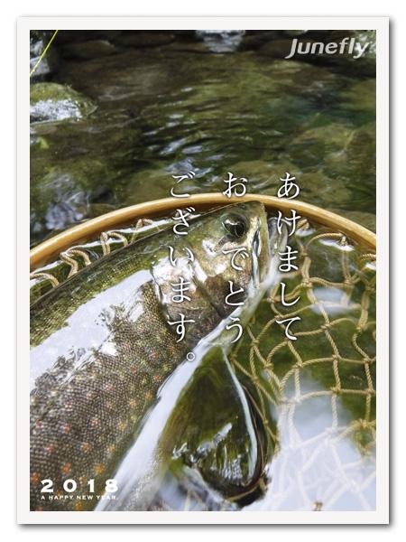 Facefish_C180101.jpg